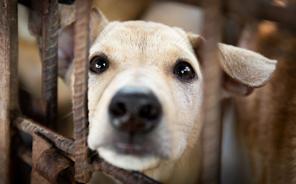VIER PFOTEn hat Hund Happy aus einem Schlachthof in Kambodscha gerettet.
