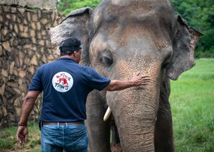 VIER PFOTEN kümmert sich um Elefant Kaavan im Marghazar Zoo.