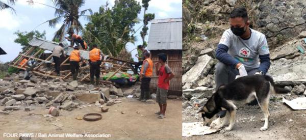 VIER PFOTEN leistet Tiernothilfe nach dem Erdbeben auf Bali.