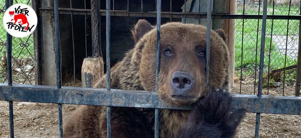 Bärin Martha lebt in einem trostlosen Käfig neben einem Restaurant im Dorf Dobrivlyany in der Ukraineö.