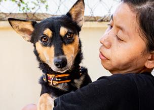 Im Oktober rettete VIER PFOTEN Hündin Lucy aus einem Schlachthaus in Kambodscha.