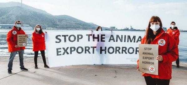 März 2021: VIER PFOTEN protestiert im Hafen von Cartagena gegen grausame Tiertransporte.
