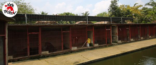 Bis zu 50 Bären gleichzeitig wurden auf dieser Farm missbraucht. © VIER PFOTEN I Hoang Le
