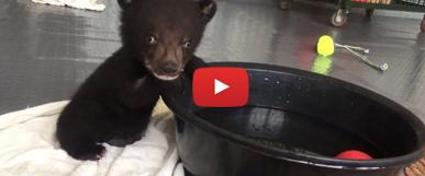 Bärenmädchen Mochi wurde von VIER PFOTEN in Vietnam gerettet.