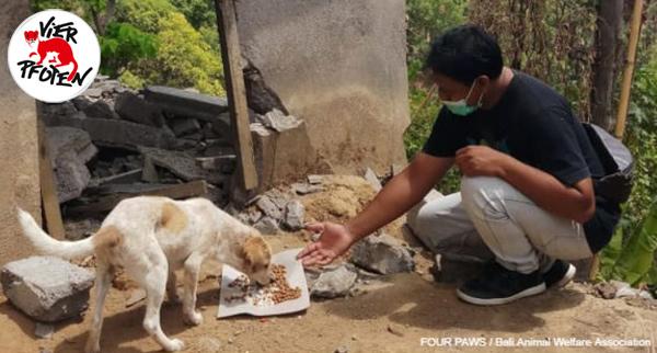 Nach dem Erdeben leiden auch die Tiere: Bitte helfen Sie den Streunern auf Bali!