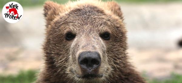 Der kleine Bär Andor bekommt Gesellschaft.