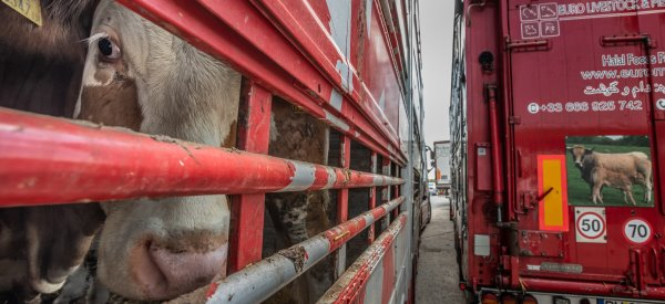 © Jo-Anne McArthur | Eyes on Animals