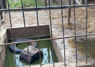 Seit 13 Jahren ist Martha in diesem trostlosen Käfig eingesperrt.