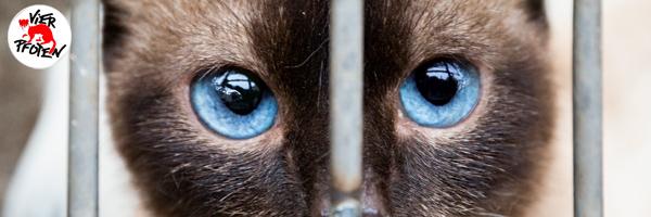 In Vietnam werden jedes Jahr etwa eine Million Katzen gefangen und grausam geschlachtet.