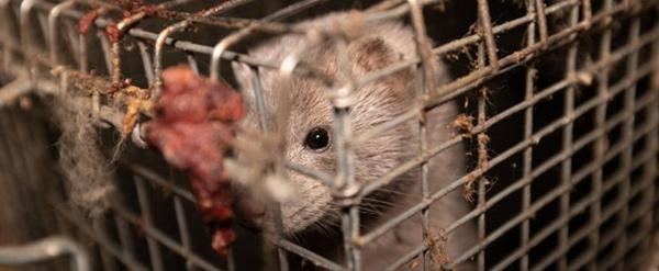 Pelztierzucht ist Tierquälerei.
