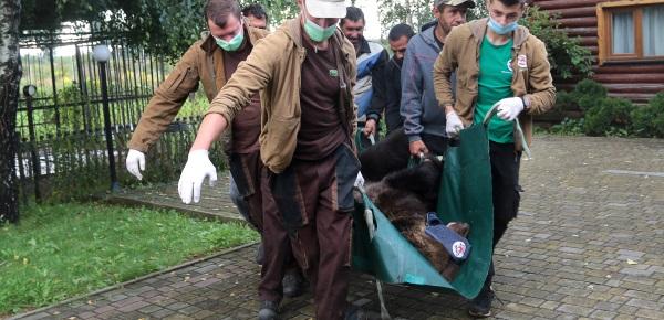 Am Tag der Rettung trägt das VIER PFOTEN Team die betäubte Bärin aus dem Käfig.